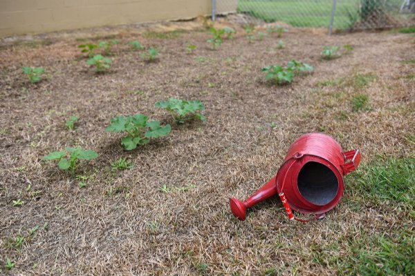 A watering can sits next to a pumpkin patch on Wednesday at Oak Hill Academy in West Point. Twenty-seven pumpkins have sprouted in this garden. / Photo by: Claire Hassler/Dispatch Staff