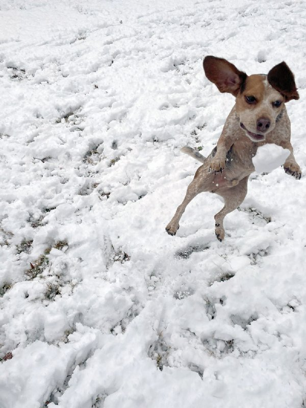 Dockett, pet of Loeghain Strnaud, plays in the snow in New Hope. / Photo by: Courtesy photo