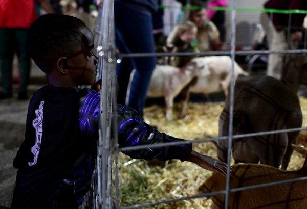 Jordan Collins, 4, pets a goat during Starkville Pumpkinpalooza on Thursday along Main Street in Starkville. / Photo by: Jennifer Mosbrucker/Dispatch Staff