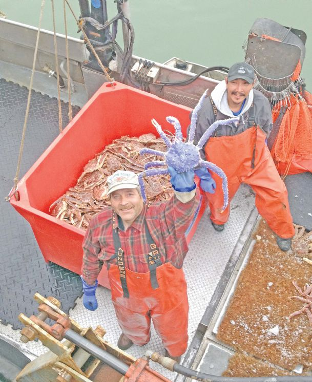 In this photo taken July 4, crab fisherman Frank McFarland, left, holds up a rare blue-colored red king crab he caught in his commercial crabbing pots as Frank Kavairlook Jr., right, looks on in Nome, Alaska.