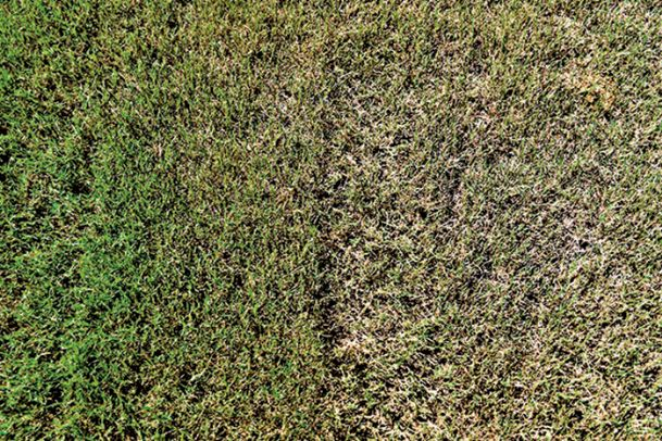 Armyworms Ravaging Yards Pastures The Dispatch