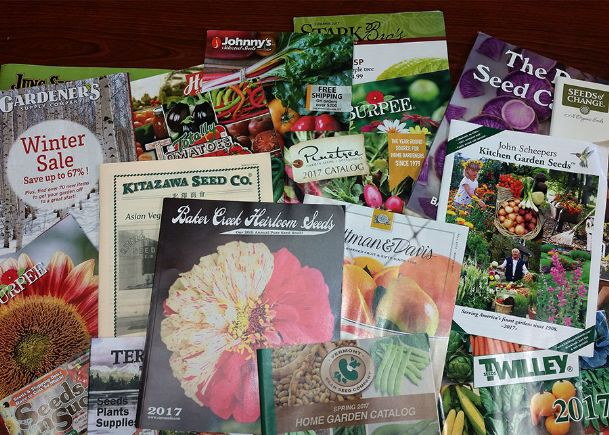 Use the winter to peruse gardening catalogs to plan what new things to try next year.