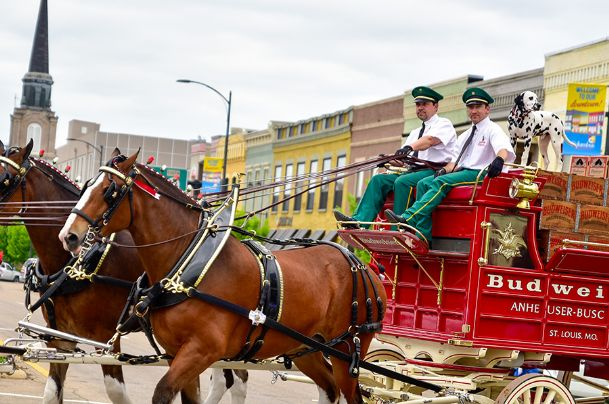 The famous Budweiser Clydesdales make their way through downtown Columbus to deliver cases of beer to local bars and restaurants Wednesday. Driving the horses are Benny Raber, left, and Rudy Helmuth of Missouri and riding along is Bud the Budweiser Dalmatian. After making deliveries the team had a public viewing at Leadership Plaza.