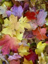 Autumn's show brought hues of reds, oranges, purples, gold and every shade of brown to our landscapes.