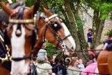 Tom Whitaker, 6, climbs into a tree at Leadership Plaza to get a better look at the Budweiser Clydesdales Wednesday.
