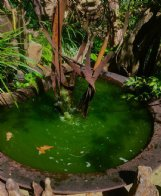An algae bloom turned water in this feature in Felder Rushing's garden as green as a leprechaun's waistcoat. The water feature was created using an antique cast iron sugar kettle.