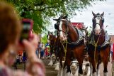 Hundreds of locals visited Leadership Plaza Wednesday to see the famous Budweiser Clydesdale horses as they made deliveries to downtown Columbus restaurants and bars.