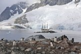 Europa's passengers and crew visited penguin colonies that numbered in the thousands while in Antarctica.
