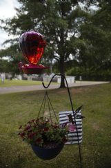 Betsy Brackin set up red petunias outside the window of her mother's room at Trinity Healthcare Center. Her mother loved gardening and bird feeding before she was admitted to the nursing home, Brackin said, so she placed purple and red petunias outside her room to light up the view.
