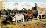 In the 1800s there was a water-powered cotton gin at Millport. To be sold, the cotton was taken by ox wagon, as in this 1910 postcard, from Millport to Columbus.