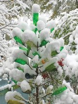 After a freeze zaps the garden, we look for color where we can find it, like in this bottle tree.
