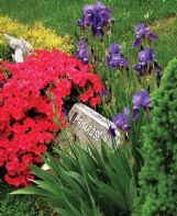 There are garden-worthy plants that can often thrive in locations, such as cemeteries, where they may receive little regular attention.